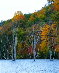 Naked Autumn Trees (Stanley Zimny (Thank You for 20 Million views)) Tags: autumn fall trees lake naked nude bare