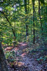 DSC05551-53_HDR (Capt Kodak) Tags: autumn chattahoocheerivernationalrecreationarea fall hdrefexpro2 madefrom3images medlockbridgepark nationalparkservice nikcollectionbygoogle niksoftware photomerge