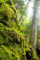 DSCF4340 (LEo Spizzirri) Tags: bevin morgan peter odin huck huckleberry shug cabin northwest seattle forest pacific mushroom moss josh betsy ladder green thick