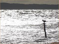 Einsam (der bischheimer) Tags: ostsee rgen derbischheimer sonnenaufgang