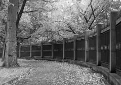 a quiet corner (rooibusch) Tags: berlin ehrenmal germany treptow zaun laub bume weg pfosten