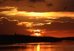 River Walk (PelicanPete) Tags: sunset afterglow gold glow reflection river cloudscape cloudburst shadow calm serene nature beauty natural hometown florida unitedstates usa floridaeverglades riverofgrass open space colorful angle dramatic composition autumn2016 10216 outdoor sky distort southflorida broward coralspringsflorida dusk cloud water rainstorm levels heatwaves distortion strong intenseuplight landscapephotography riverscapephotography waterscapephotography artisticsunsetphotography field landscape rain coast shore backlit riverwalk pumpkin flickrdiamond dmslair diamondclassphotographer