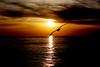 sunset (OnurAcar87) Tags: life trip sunset sea vacation sky sun reflection bird art nature topf25 beautiful birds animals canon turkey de topf50 topf75 tour live topv1111 horizon istanbul enjoy 1855mm moment magical topf100 topf111 bosphorus 650d naturefinest