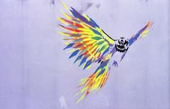 Vexta (Bijou Lou) Tags: india streetart colour bird art film 35mm graffiti pentax k1000 contemporaryart flight kerala kochi fortcochin vexta