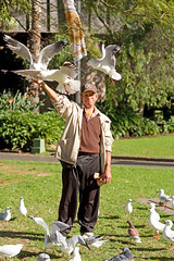 Mervyn the bird man of Sydney (loobyloo55) Tags: