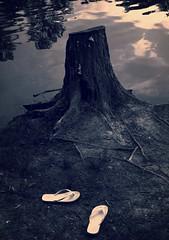 secret (LauraSorrells) Tags: park blue water mystery dark pond shoes jasper moody heart quote sandals secret may stump dreams flipflops dreamlike stillness emptiness enigmatic 2010 otherworldly secretive secrecy somberbeauty