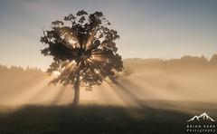 The Light Catcher (.Brian Kerr Photography.) Tags: cumbria lazonby rivereden mist light sonyuk a7rii briankerrphotography