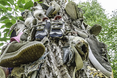 Shoe Tree (TAC.Photography) Tags: shoes whimsical treeart treeclimbing