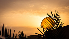 Balloon (B. Wurzinger) Tags: sunrise sunup balloon after party yellow plant silhouette
