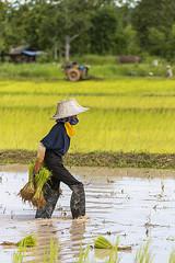 ChiangRai_2742 (JCS75) Tags: asia asie thailand thailande canon chiangrai