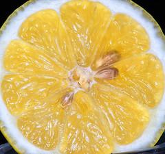 lemon slice (xanderswan) Tags: lemon slice yellow fruit seeds lemonslice macro closeup close citrus lemonseeds