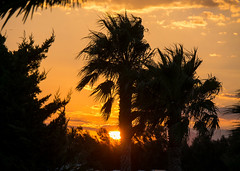palms on sunset (d@neumi) Tags: travel sunset palms sky outdoor spain costa brava palmen sonnenuntergang himmel abenddmmerung abendstimmung bluehour evening spanien urlaub reisen sundown