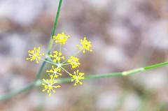 Little Details (Cristina_BL) Tags: flora 7dwf