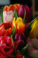 Tulips (gornabanja) Tags: tulip tulips flower flowers plants nature red yellow pretty color colour colors colours colorful colourful nikon d70