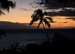 If you stay (after the sunset) / Ako ostane (poslije zalaska sunca) (Gordana AM) Tags: wwwgordanaphotocom gordanamladenovic gordana photography photographer photo portcoquitlam bc britishcolumbia vancouver lowermainland canada lepiafgeo maui hawaii kihei charlie young beach sunset after night dramatic colour silhouettes palm tree ocean pacific water horizon dark contrast rich