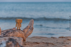 Danbo at the beach (Rainer Preu) Tags: nikon nikonshooters digital d300 frankreich sdfrankreich france valrasplage beach plage strand sand meer sea danbo danboard holz wood natur naturephotography nature wasser