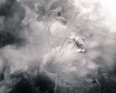 Inner Visions of Nature - Into the Unknown (Charles Opper) Tags: canon georgia icm intentionalcameramovement abstract blackandwhite bokeh crapemyrtle flower highkey light macro mist monochrome mood nature raindrops