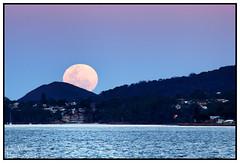 Pink Moon Rising (juliewilliams11) Tags: outdoor photoborder moon fullmoon pink bay shoreline dusk newsouthwales australia