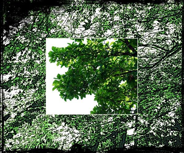 The world 39 s newest photos of jardin and mosa que flickr for Jardin 5 juillet biskra