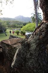 it's certainly tropical (1600 Squirrels) Tags: 1600squirrels photo 5dii lenstagged canon24105f4 smithstropicalparadise wailuamarinastatepark wailua eastside kauai kauaicounty hawaii usa
