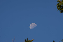 DSC04087 (F150Terp) Tags: minolta mc tele rokkor hf 30cm f45 minoltamctelerokkorhf30cmf45 columbia md moon morning 300mm