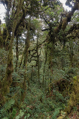 Mossy Forest, Cameron Highlands (tik_tok) Tags: mossyforest trees jungle cameronhighlands malaysia asia
