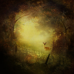 Surprise (BirgittaSjostedt) Tags: creation art fanatsy landscape pain painting texture nature morning glow bird deer fence fencefriday birgittasjostedt ie magicunicornverybest surreal serene outdoor