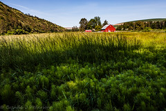 Agrarian (Culinary Fool) Tags: palouse usa washington 2016 hill red palousescenicbyway wa brendajpederson travel horsetail photography culinaryfool roadtrip farm ranch may barn travelwa 2470mm28