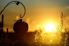 Sonne in Ruh (Renate Bomm) Tags: 366 2016 amanecer bokeh canoneos6d ef100mmf28l flickrunitedaward light renatebomm sky sol sonnenaufgang sunrise yellow ruh waldbrl sonne nature sun goldengallary ngc