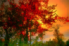 New England Fall (Bets<3 Fine Artist ~Picturing Light ~ Blessings ~~) Tags: mainenortheasternunitedstates fall paining photopainting trees leaves atmosphere