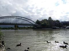 IMG_3424_Fotor01_Fotor06 (Ela's Zeichnungen und Fotografie) Tags: hannover mittellandkanal kanal landschaft natur baum haus ente vogel wolke himmel boot brcke stein