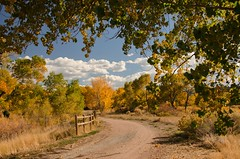 Put On A Happy Face (catmccray) Tags: fall autumn colorado chatfieldstatepark fallcolor bluesky fencefriday