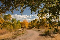 Put On A Happy Face (catmccray) Tags: fall autumn colorado chatfieldstatepark fallcolor bluesky fencefriday