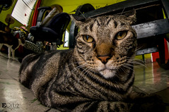 Isidoro the Cat (Edward Ley Ortiz) Tags: cats peeleng 8mm nikon pets friend gatos felinos mascotas ojodepez