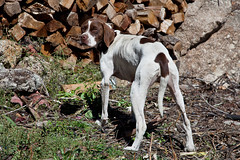 Mimicry (JOAO DE BARROS) Tags: barros joao mimicry dog animal