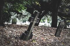 Samuel Packett (#Weybridge Photographer) Tags: adobe lightroom canon eos dslr slr 40d brompton cemetery west london kensington graveyard grave graves autumn leaves lean leaning toppling cross gravestone samuel packett