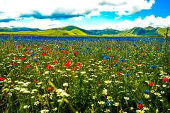 A game of thones (riccardopallotta) Tags: castelluccio nature wild flowers mountain umbria norcia gamesofthones colours sky heaven