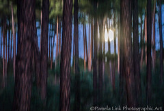 Full Moon Rising (PamLink) Tags: whitesparcampground prescottnationalforest abstract trees pines fullmoon moon treetrunks camping evening