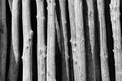 Trunks (Joe Alcorn) Tags: amalfi campania italy trunks nature tree wood contrast minimalism texture pattern blackandwhite outdoor abstract lines monochrome