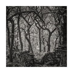 darkwoods11 (ciollileach) Tags: woodland oaks twisted peakdistrict haunted tangled