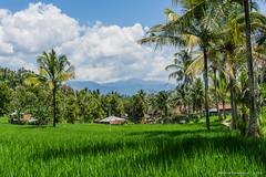 _DSC3868_Bali_09_16 (Saverio_Domanico) Tags: bali indonsie munduk voyage