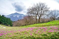 Hitsujiyama Park (ShiroWengPhotography) Tags: shiroweng photography 2016 travel japan kansai kyoto hitsujiyama park  grass sky cloud mountain natural landscape tau tauphotography