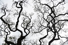 In My Veins (Anna Kwa) Tags: tree branchlets nature art annakwa nikon d750 afsnikkor24120mmf4gedvr my inmyveins always seeing heart soul throughmylens abstract monochrome naturessketches silhouettes