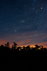 Dawn of the day (VPMPhoto) Tags: landscape trees tree araucaria araucana nikon d750 wide angle 24mm tokina 1735 night astro astrophotography astrophoto stars sunlight dawn day