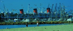 The Queen in Long Beach (beachpeepsrus) Tags: beach birds beachfront blackskimmers boats harbor shore sky