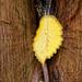 161008 Don´t leaf me...