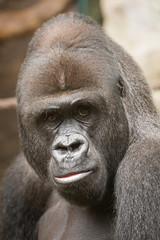 2016-10-07-12h04m28.BL7R0897 (A.J. Haverkamp) Tags: canonef70200mmf28lisusmlens frankfurtammain hessen germany viatu dob20121998 pobbaselswitzerland frankfurt dierentuin zoo httpwwwzoofrankfurtde