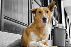 Miradas (Tato Avila) Tags: colombia perro dog blanconegro monocromo ojos hocico colores clido