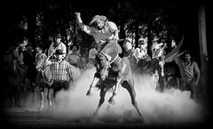 Odilo Gonalves (Eduardo Amorim) Tags: gacho gachos gaucho gauchos cavalos caballos horses chevaux cavalli pferde caballo horse cheval cavallo pferd crioulo criollo crioulos criollos cavalocrioulo cavaloscrioulos caballocriollo caballoscriollos pampa campanha fronteira dompedrito riograndedosul brsil brasil sudamrica sdamerika suramrica amricadosul southamerica amriquedusud americameridionale amricadelsur americadelsud cavalo         hst hest hevonen  brazil eduardoamorim jineteada gineteada