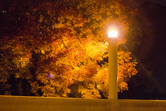 Golden Leaves in Wind (VBuckley.com) Tags: wind leaves colorfulleaves goldenleaves streetlight contrast tree fall autumn